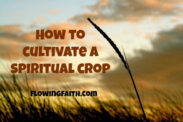 How to cultivate a spiritual crop
